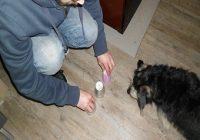 Hütchenspiel für Hunde. Mann bewegt die Becher