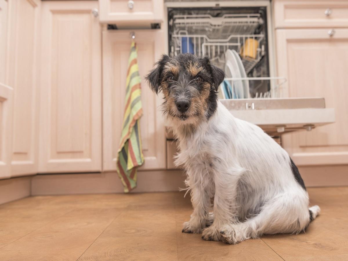 Hund allein Daheim. Hund sitzt gemütlich in der Küche