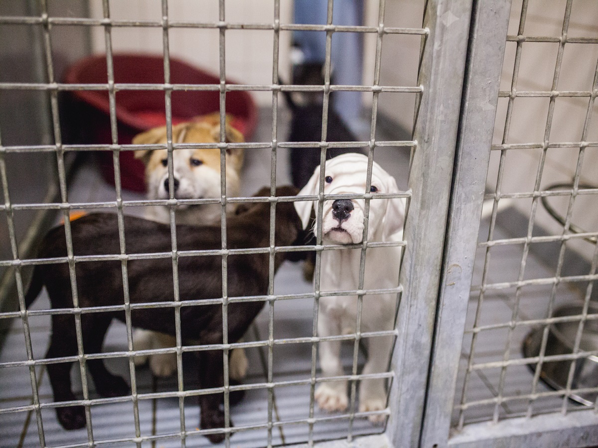 Hund anschaffen. Hundewelpen im Tierheim