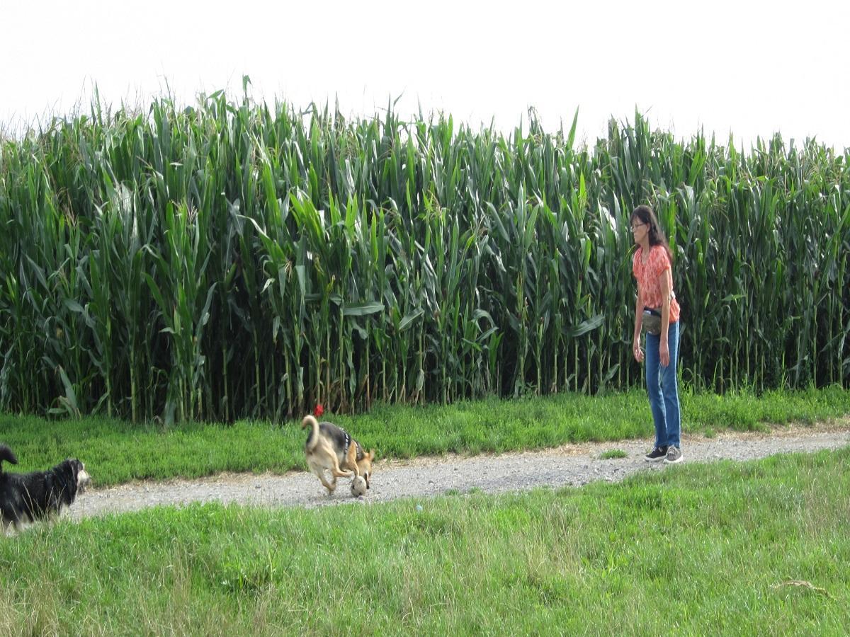 Hund in der Mitte. Hund jagt Ball hinterher