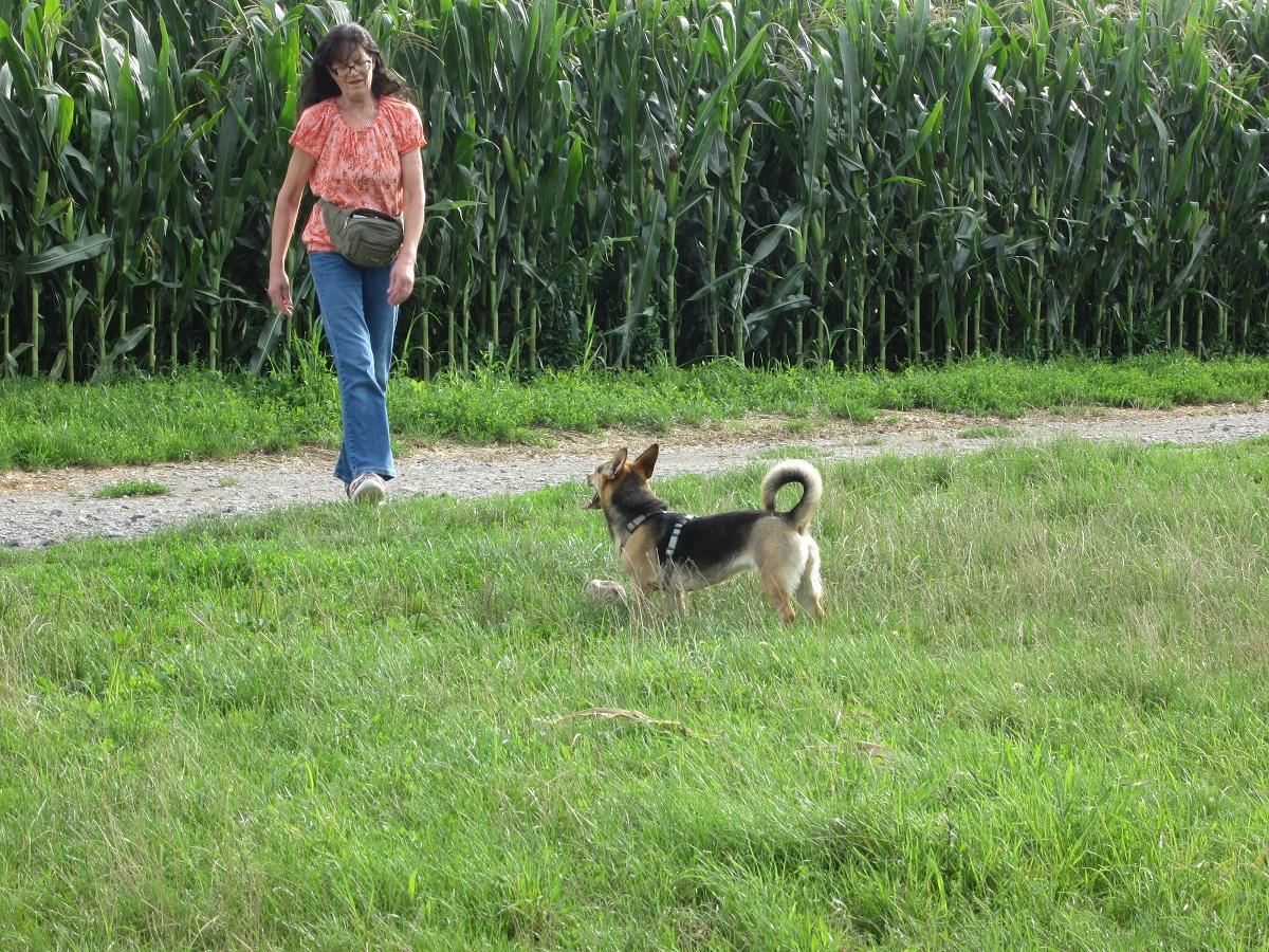 Hund in der Mitte. Frau läuft zum Ball der vor Hund liegt