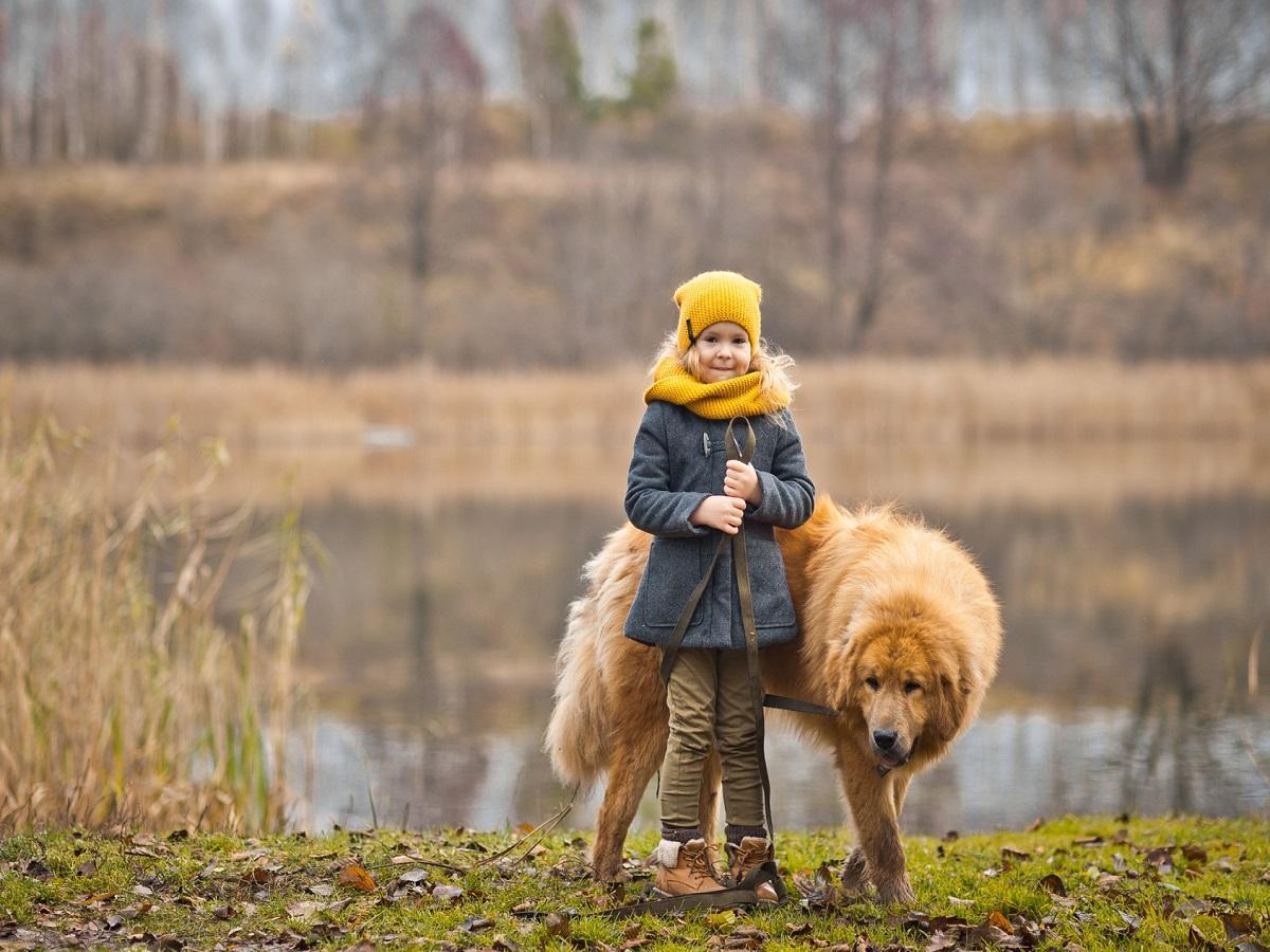 Hund und Kind. Kleines Mädchen mit großem Hund an der Leine