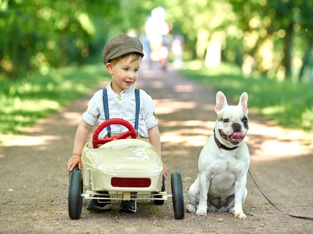 Hund und Kind. Junge im Spielzeugauto und Mops warten auf Startsignal