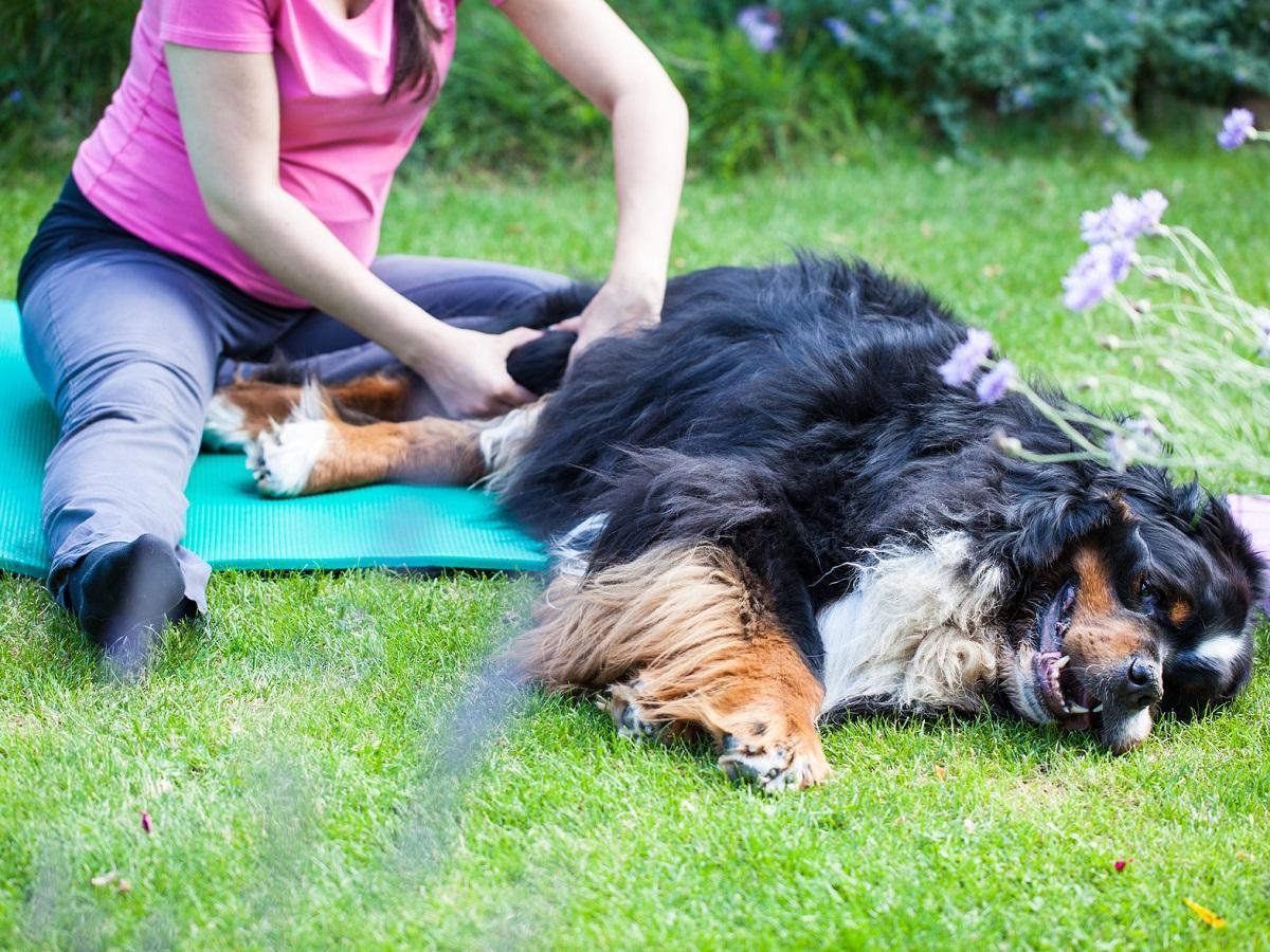 Hunde Wellness. Physiotherapie beim Hund bei Arthrose