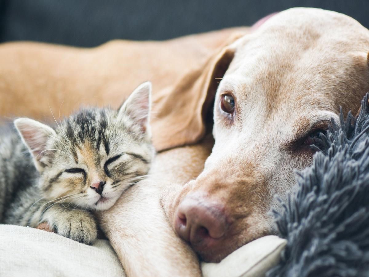 Hundealtersheim. Hund und kleine Katze, die auf eine Couch legen