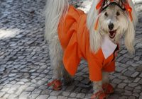 Hundebekleidung. Hund mit Kleidung im Schatten
