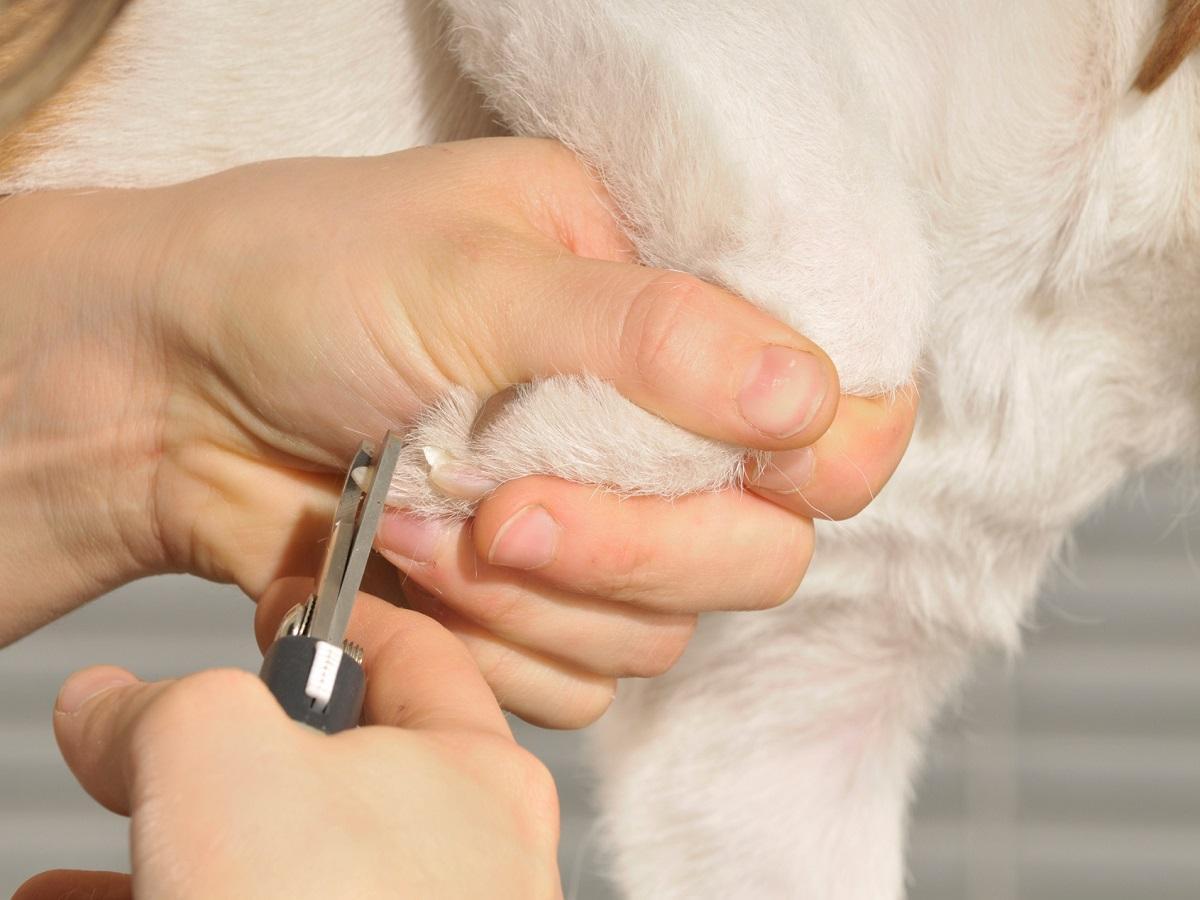 Der Hundefriseur. Frau schneidet Hund die Krallen