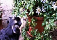 Hundehautwurm beim Hund mit Beschriftung. Hund schnuppert an Blumen