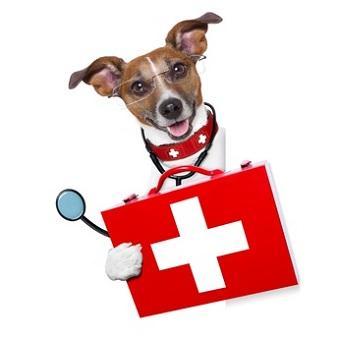Krankheiten beim Hund Auflistung. Dr. Hund mit Brille und Stethoskop