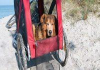 Hundeleiden im Alter. Hunde Senior liegt gemütlich im Fahrradanhänger am Meer