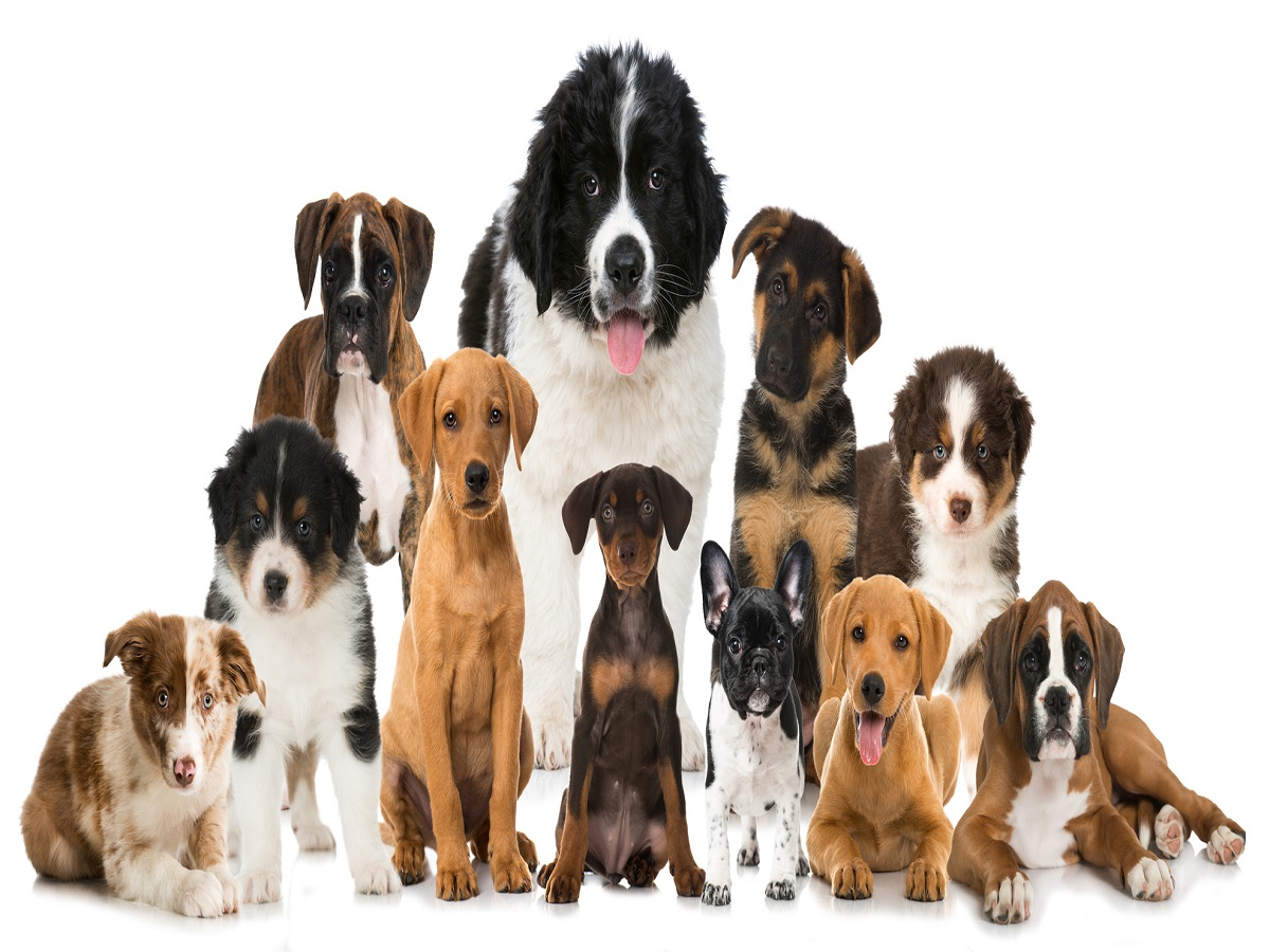 Hunderassen. Verschiedene Hundewelpen