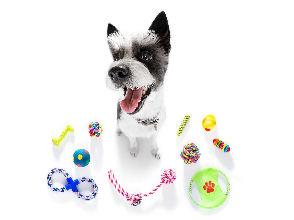 Hundespielzeug. Hund umgeben von verschiedenen Spielsachen