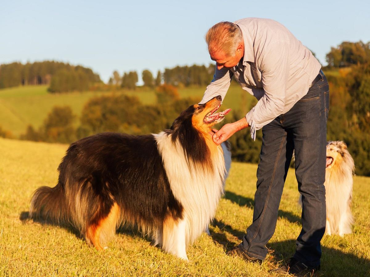 Hundesprache. Mann streichelt seinen Collie