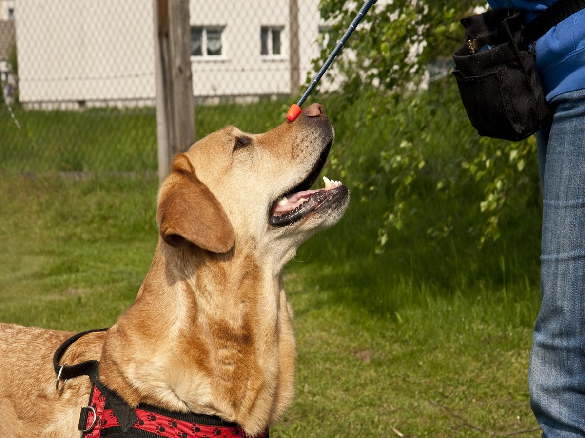 Hundetrick. Training mit Target Stick beim Hund