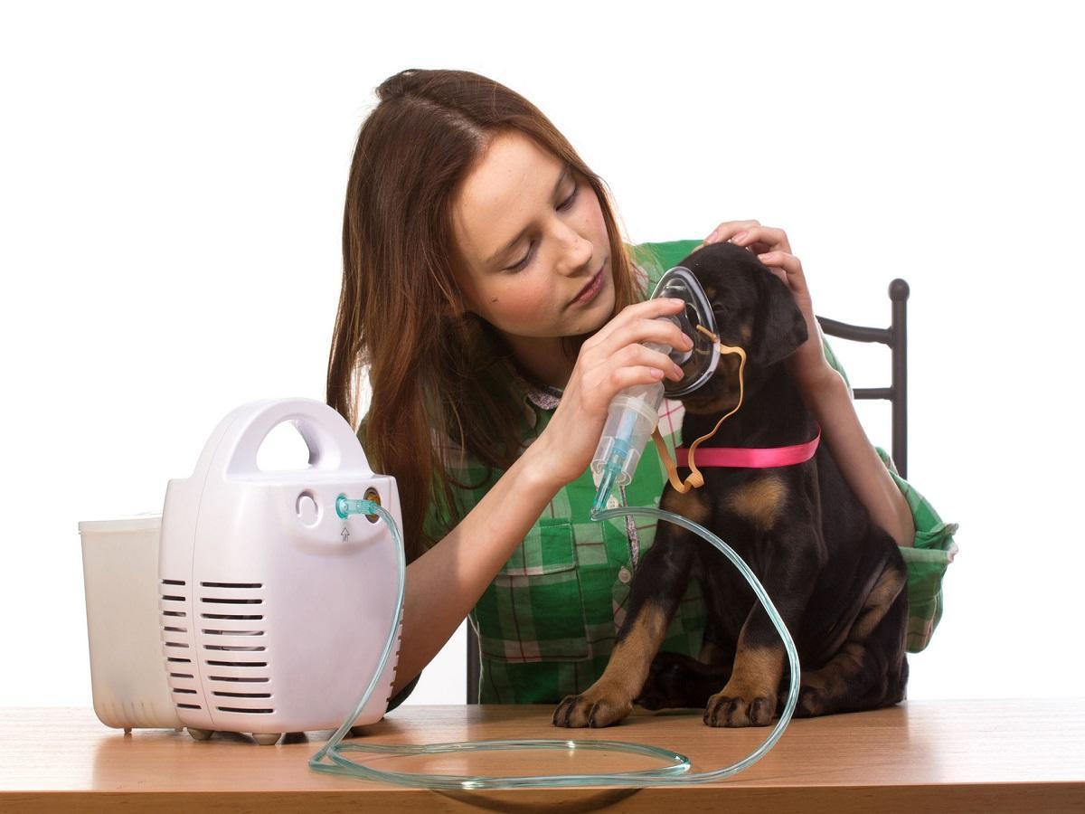 Husten beim Hund. Tierarzt und Welpe mit Inhalator