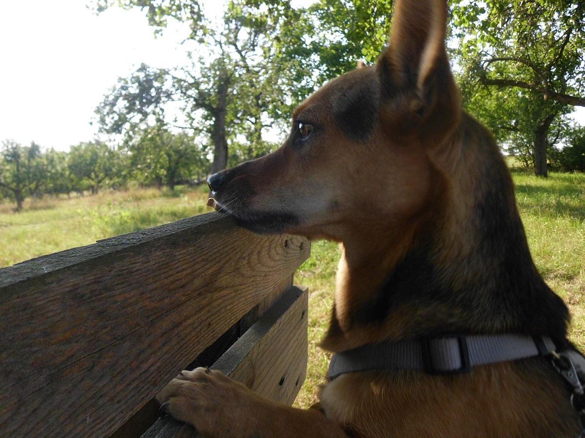 Ideen für Hunde Spiele. Hündin nimmt Leckerli von einer Bank in der Natur.