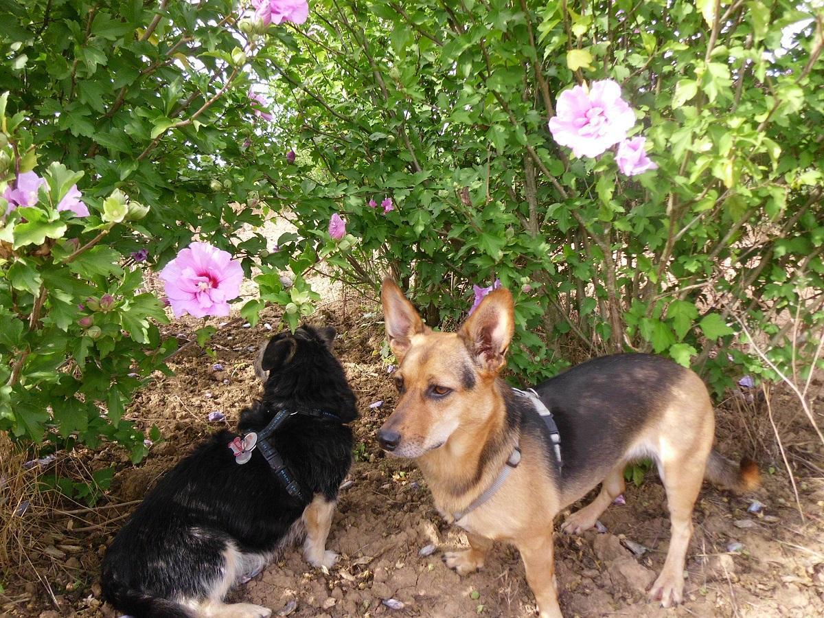 Insektenstiche beim Hund. Zwei Hunde vor schönen Blumen