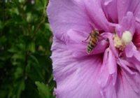 Insektenstiche beim Hund mit Beschriftung. Insekt auf einer Blume