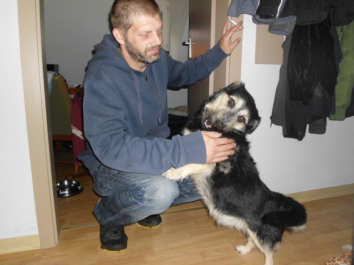 Kriebelmücke beim Hund. Mann spielt mit Hund
