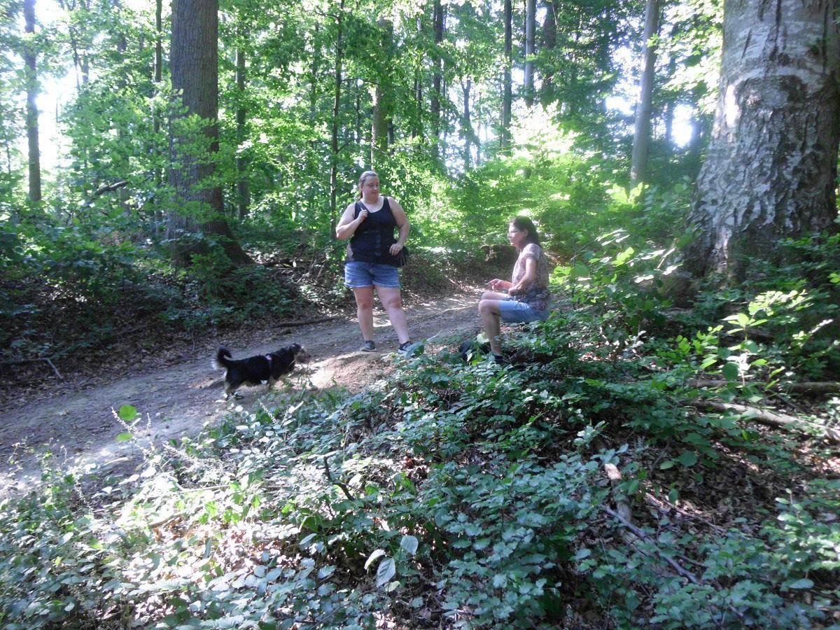 Kriebelmücke beim Hund. Zwei Frauen im Wald mit Hund