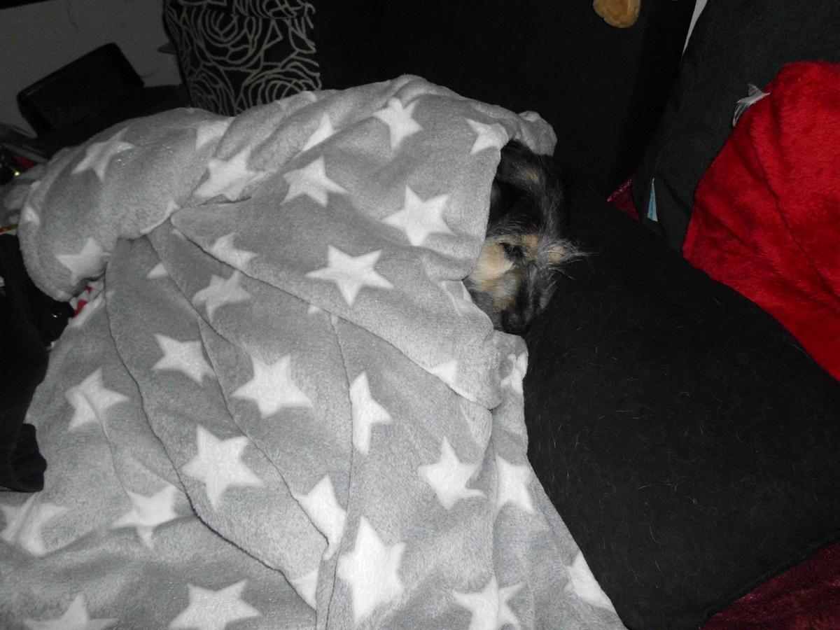 Milben beim Hund. Kranker Hund in Decke gekuschelt