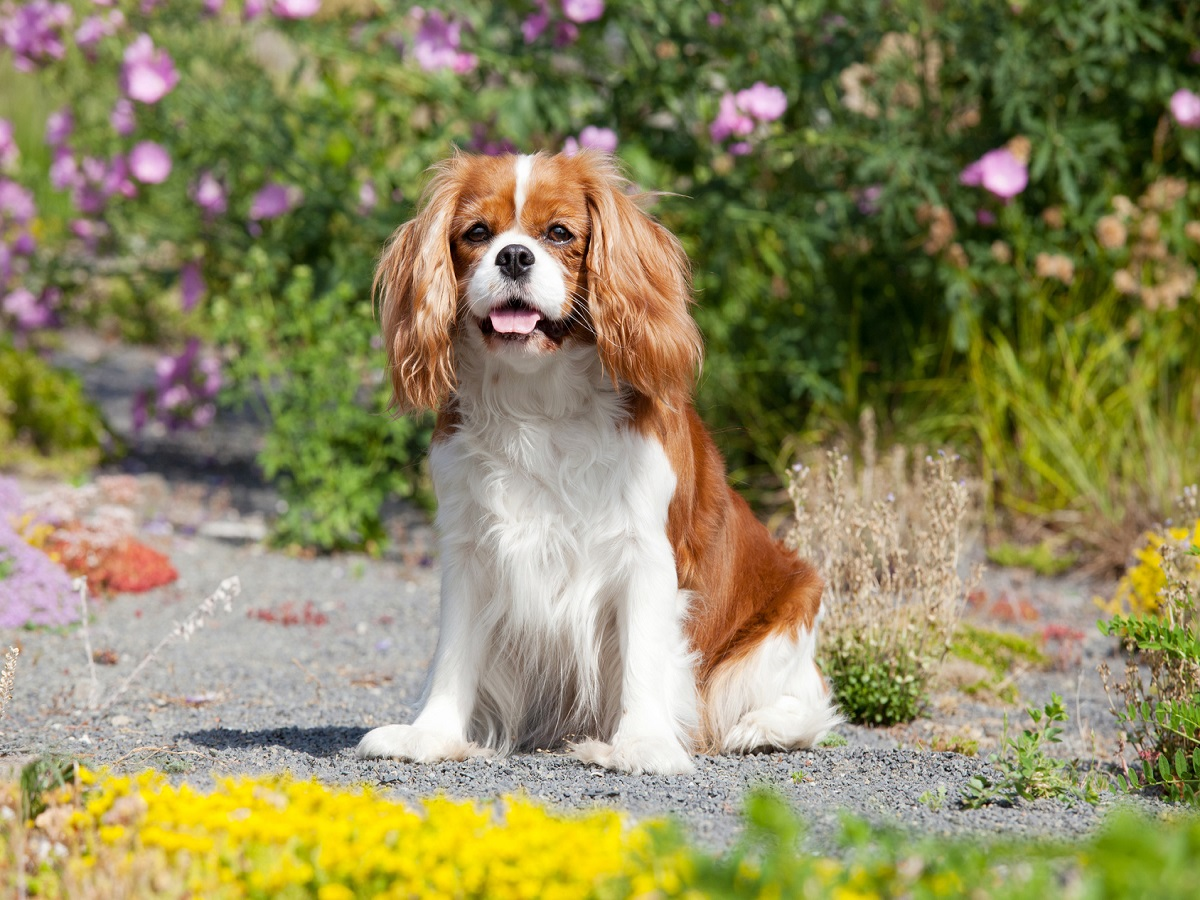 Pankreatitis beim Hund. Hund sitzt in der Natur
