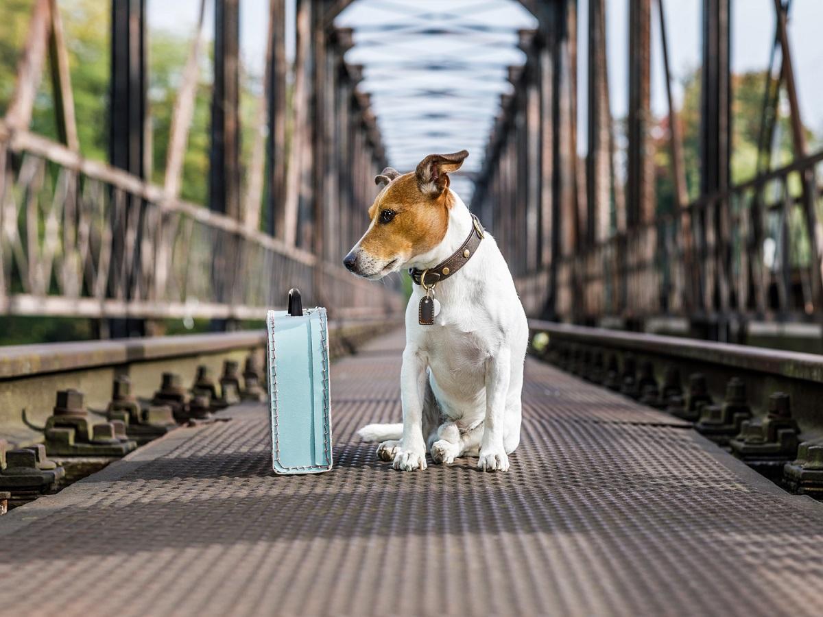 Passende Hundepension. Hund sitzt neben Koffer auf Brücke