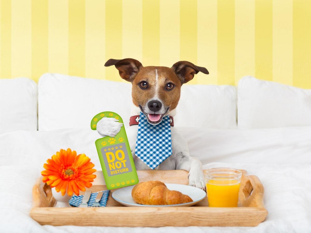 Passende Hundepension. Hund mit Essenstablett im Bett