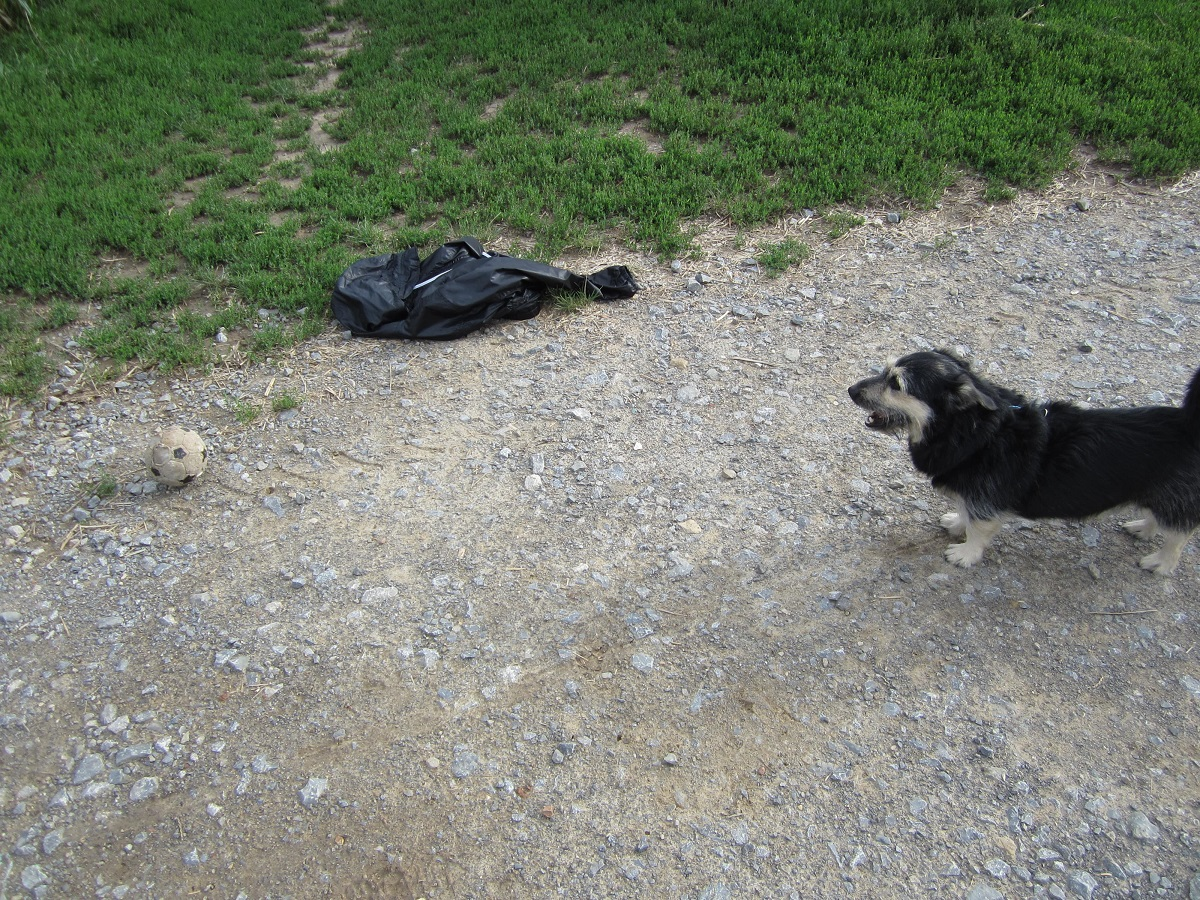 Pfotenball. Hund wartet bis Ball gespielt wird