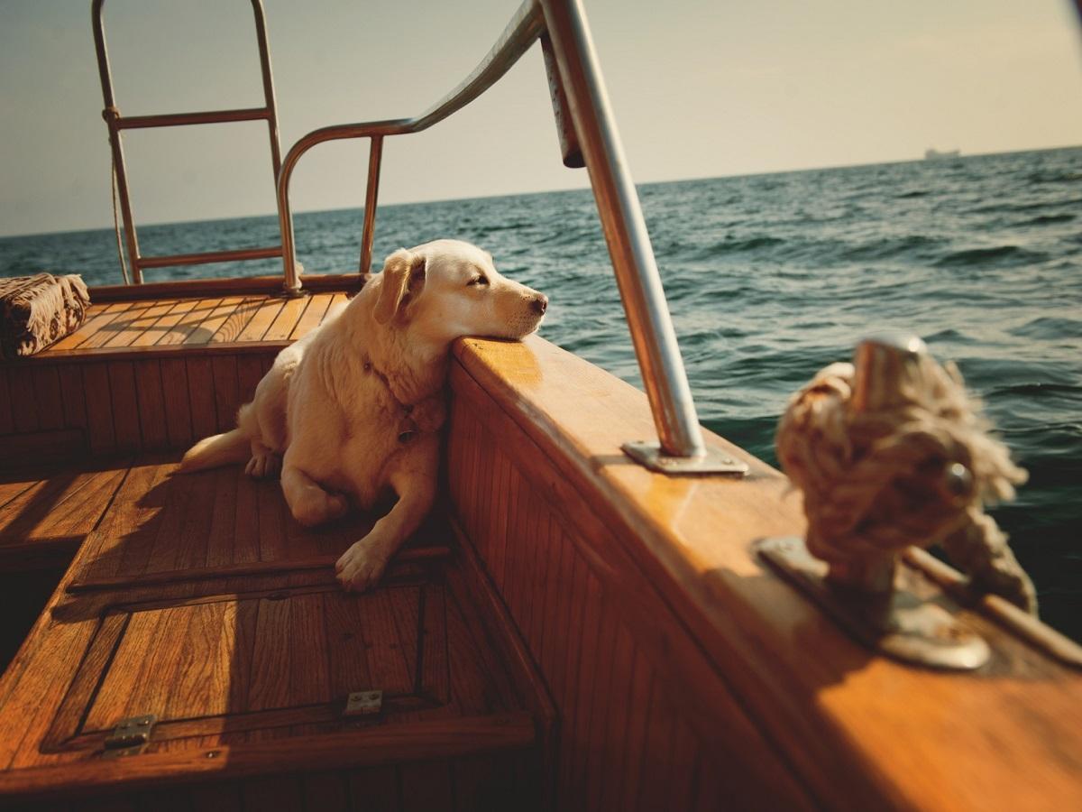 Reiseübelkeit beim Hund. Liegender Hund auf einem Schiff im Meer