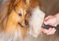 Richtige Hundepflege. Hund wird das Fell gebürstet