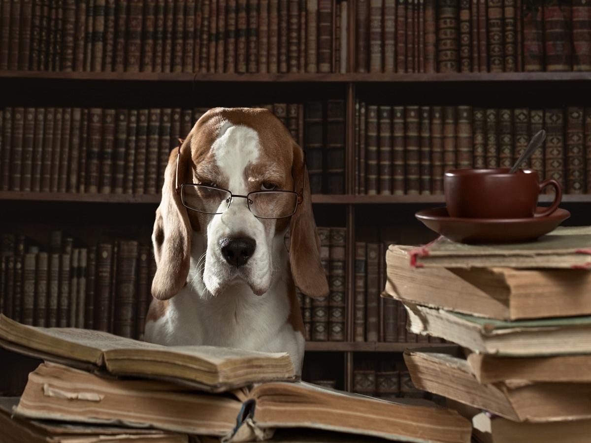Sachkundenachweis §11 Tierschutzgesetz. Hund mit Brille beim lesen