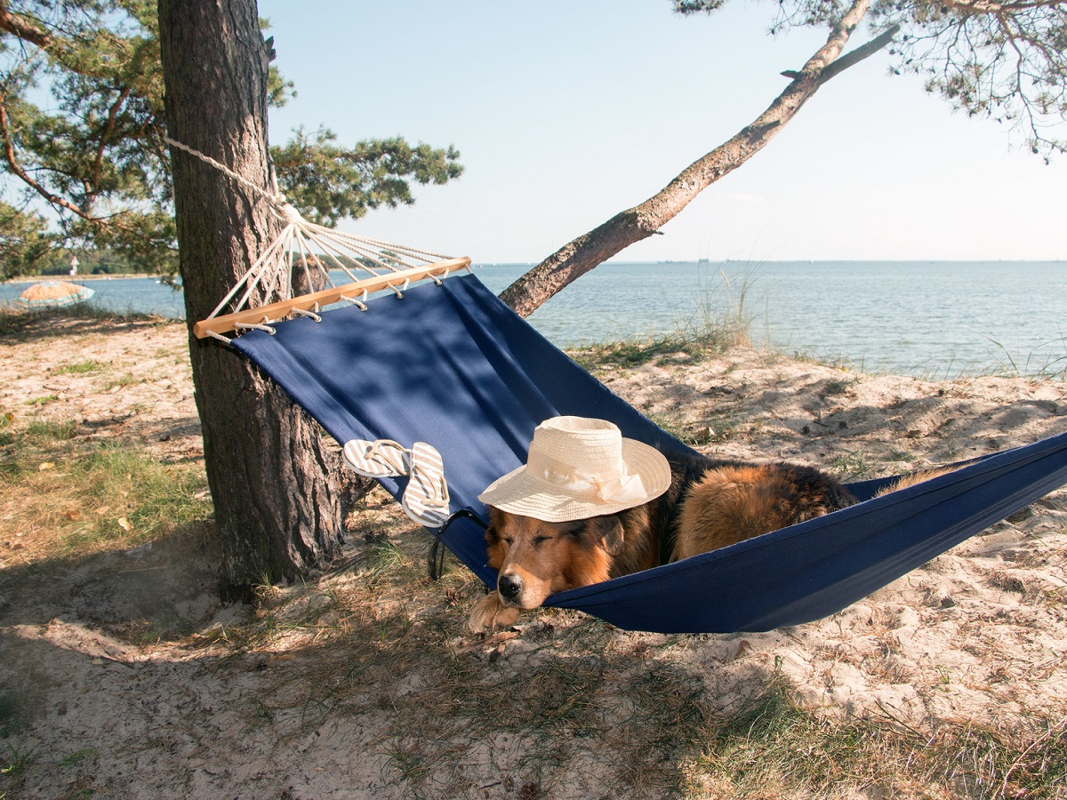 Schlafgewohnheiten eines Hundes. Hund mit Hut am Meer schläft in einer Hängematte