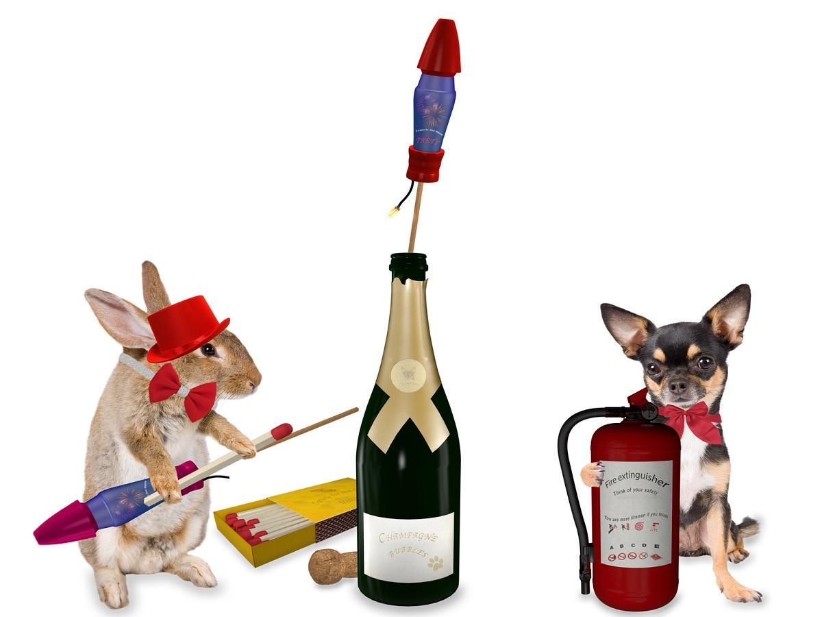 Silvester mit Hund. Sicherheits Chihuahua unterstützt Hase beim Silvesterraketen starten lassen