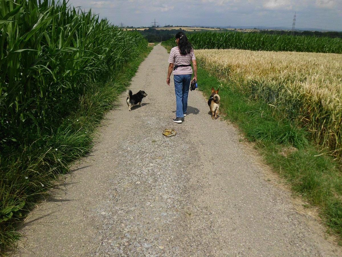 Spaziergang mit Hund interessant machen. Frau läuft mit zwei Hunden spazieren