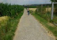 Spaziergang mit Hund interessant machen. Frau läuft mit zwei Hunden einen Feldweg entlang