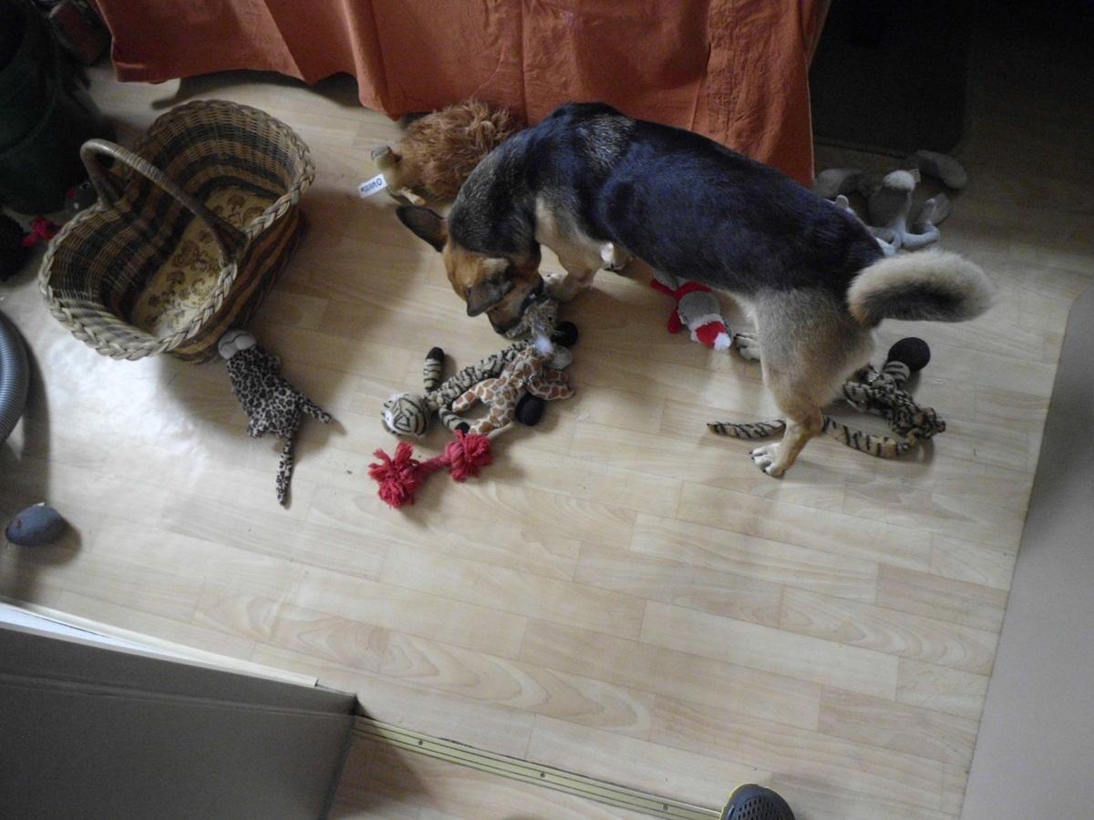 Spielzeug aufräumen Ordnung muss sein Der Pfoten Freund