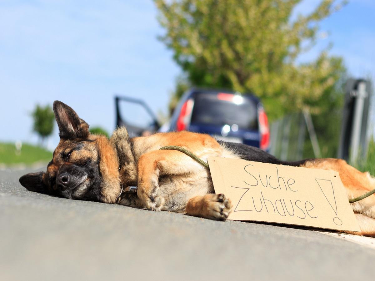 Straßenhunde. Hund suche neues Zuhause