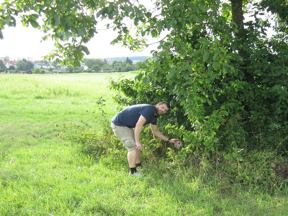 Suchen und bringen spielerisch umsetzen. Mann versteckt Ball unter einem Baum