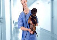 Tierarzt mit Welpen auf dem Arm