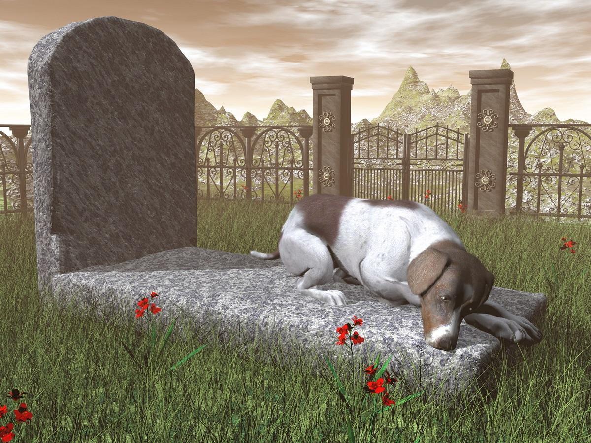 Trauer bei Hunden. Liegender Hund auf einem Grab