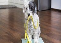 Übergewicht beim Hund. Hund auf Waage mit Maßband