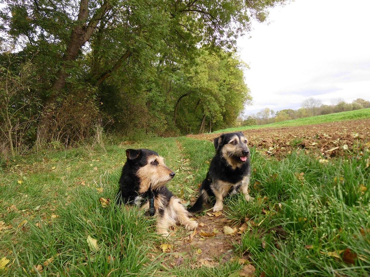 Urlaub mit Hund. 2 Hunde am Waldrand