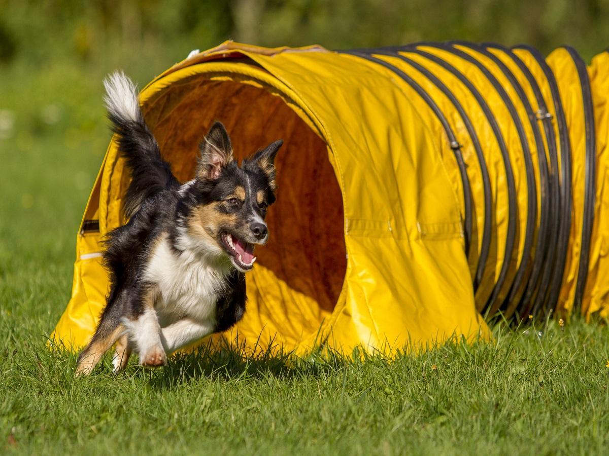 Vierkampf mit Hund. Hund kommt aus Röhre