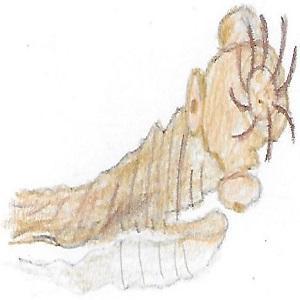 Bandwurm gezeichnet