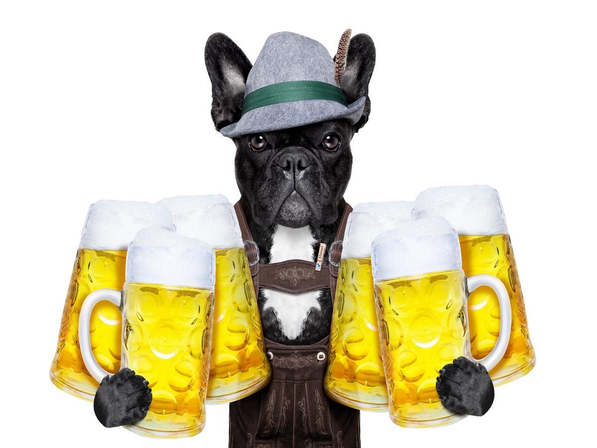Was ist Hundebier. Hund in Lederhose mit Bierkrügen