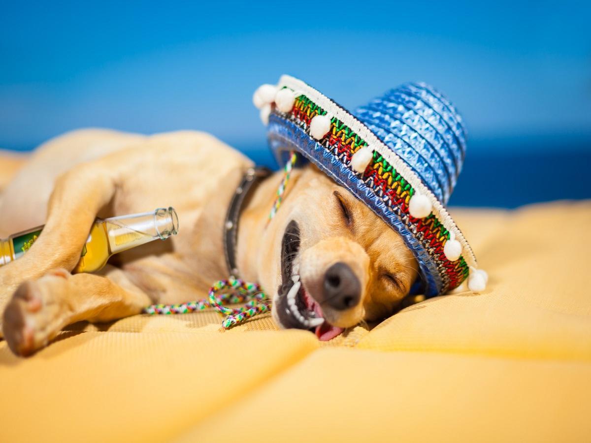 Was ist Hundebier. Schlafender Hund mit Bierflasche und Sombrero