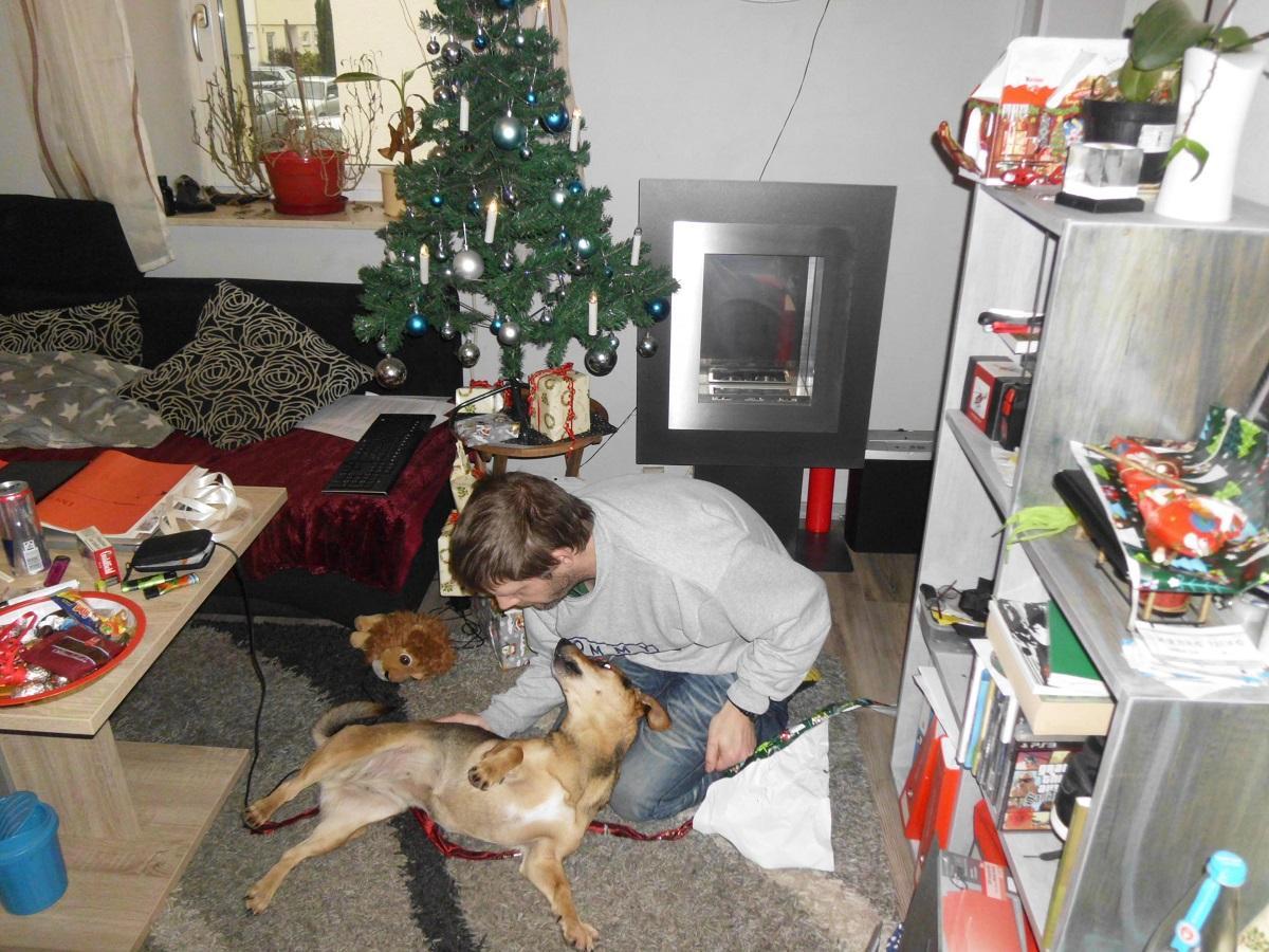 Weihnachtsgeschenk Hund. Mann spielt mit seinem Hund