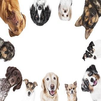 Wissenswertes über Hunde. Viele unterschiedliche Hunderassen kreisförmig vor weißem Hintergrund, Freigestellt