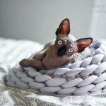 Svart Sphynx Blå ögon Nakenkatt Uppfödare